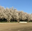 March 2017 Almond Market Update