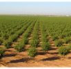 May 2017 Almond Market Report